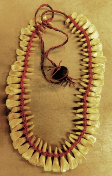 ANIMAL TOOTH NECKLACE